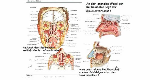 Archiv-Muskeln von Kopf und Hals, Anatomie des Halses, Hirnnerven