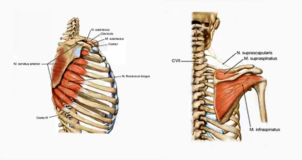 Anatomie I | E-Learning mit Lecturio
