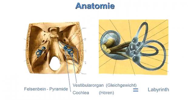 Äußeres Ohr und Mittelohr | Online Lernen mit Lecturio