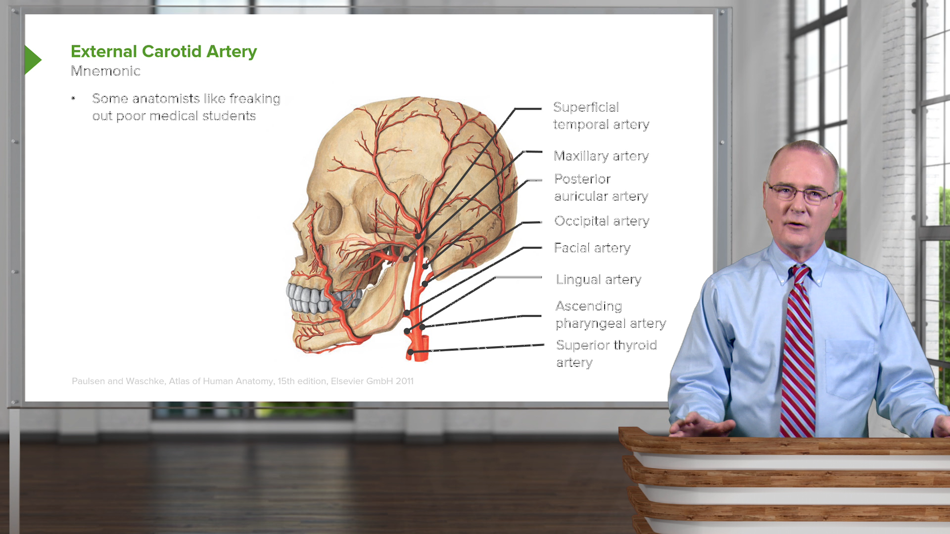Head and Neck Anatomy – Online Medical Course | Start for Free!