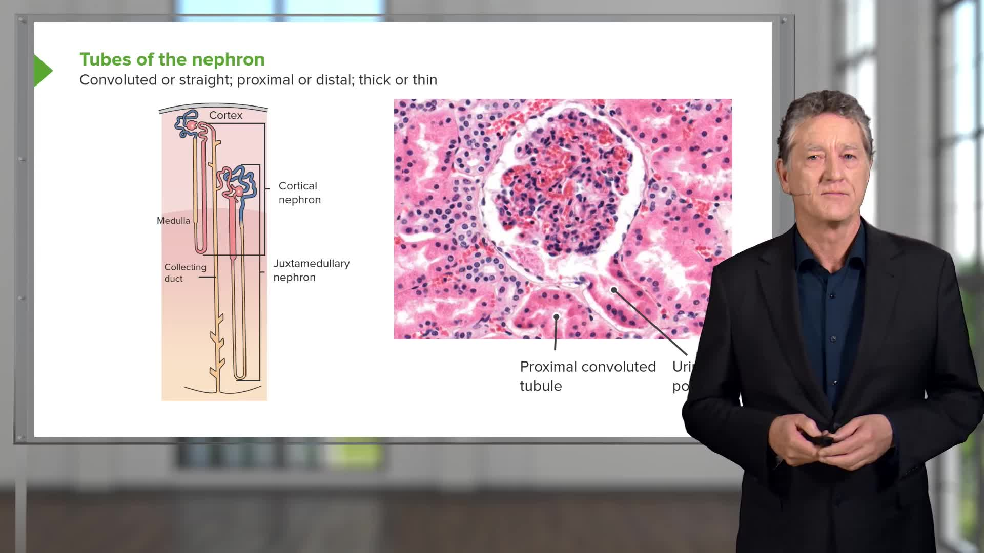 Urinary Histology – Online Medical Course | Lecturio