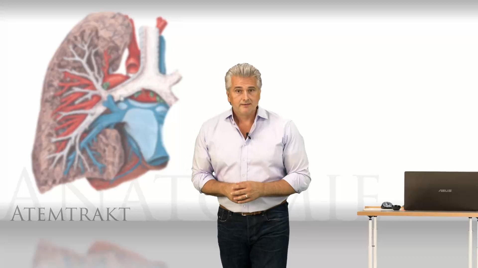 Atemtrakt Anatomie – Online Medizin Kurs | Lecturio