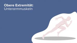 Obere Extremität: Unterarmmuskeln