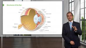 Optic Pathology