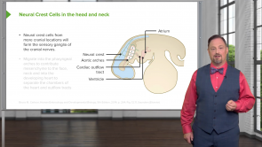 Development of the Nervous System, Head, and Neck