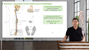 Untere Extremität - Unterschenkel und Fuß