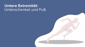 Untere Extremität: Unterschenkel und Fuß