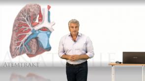 Basiswissen Atemtrakt Anatomie