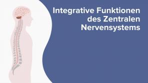 Integrative Funktionen des Zentralen Nervensystems