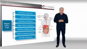Basiswissen Magen-Darm-Trakt Anatomie