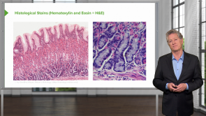Histological Techniques and Staining