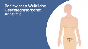 Basiswissen Weibliche Geschlechtsorgane: Anatomie