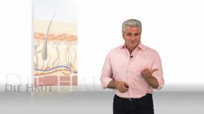 Basiswissen Haut & Hautanhangsgebilde: Anatomie & Physiologie