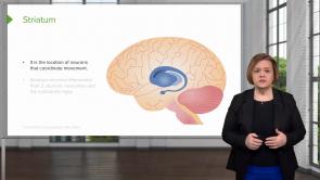 Central Nervous System (CNS) Medications (Nursing)