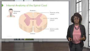 Spinal Cord and Spinal Nerves – Physiology (Nursing)