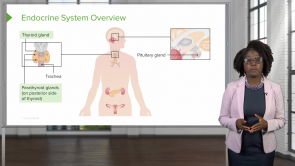 Endocrine System – Physiology (Nursing)