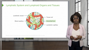 Lymphatic System – Physiology (Nursing)