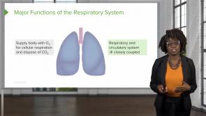 Respiratory System – Physiology (Nursing)