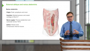 Ribs Diaphragm Anatomy/Fx (LMU OMS 1 Fall Osteopathic Principles and Practices I Week 9)