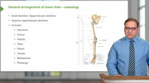 Leg / Ankle (LMU OMS 1 Fall Medical Gross Anatomy Week 12)