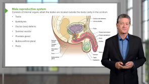 Male Reproductive system and Urinary (LMU OMS 1 Medical Histology Week 15)