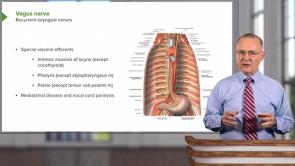 Larynx / Trachea (LMU OMS 1 Medical Gross Anatomy Week 16)