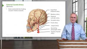 Orbit / Ear (LMU OMS 1 Medical Gross Anatomy Week 16)