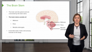 Neurological Disorders – Med-Surg Nursing