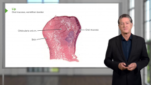 Oral Cavity / Pharynx (LMU OMS 1 Fall Medical Gross Anatomy Week 18)