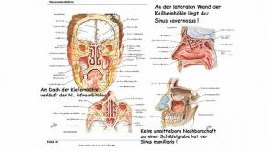 Anatomie II