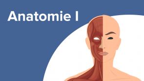 Anatomie I