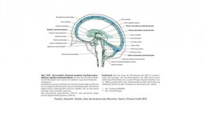 Neurologie II