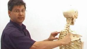 Prüfungsorientierte Anatomie