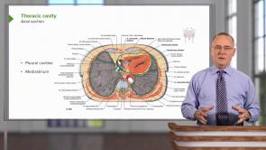 Cardiovascular System (NP)