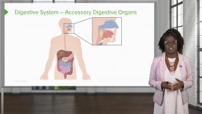 Gastrointestinal System (NP)