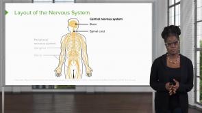 Nervous System & Special Senses (NP)