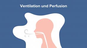 Ventilation und Perfusion