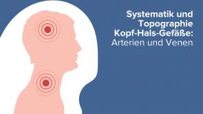Systematik und Topographie Kopf-Hals-Gefäße: Arterien und Venen