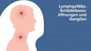 Lymphgefäße, Schädelbasisöffnungen und Ganglien