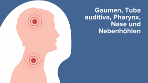 Gaumen, Tuba auditiva, Pharynx, Nase und Nebenhöhlen