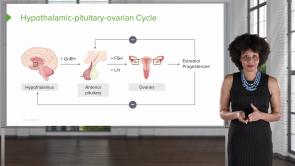 Menstrual Cycle (Nursing)