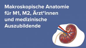 Makroskopische Anatomie für M1, M2, Ärzt*innen und medizinische Auszubildende