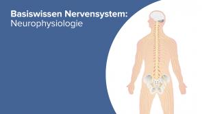 Basiswissen Nervensystem: Neurophysiologie