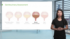 Assessment of the Genitourinary System (Nursing)