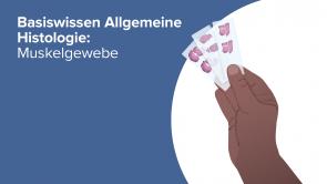 Basiswissen Allgemeine Histologie: Muskelgewebe