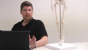Untere Extremität - Becken- & Oberschenkelanatomie