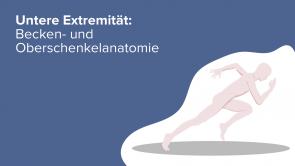 Untere Extremität: Becken- und Oberschenkelanatomie