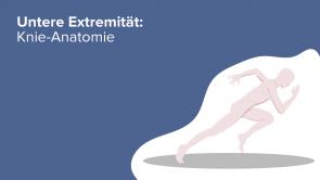 Untere Extremität: Knie-Anatomie