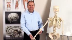 Grundlagen der Anatomie und Physiologie für Krankenpfleger