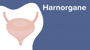 Harnorgane
